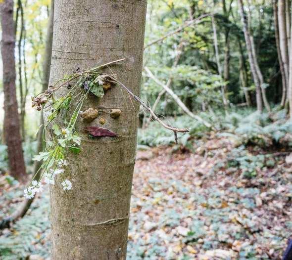 Tree face daisy hair leaf lips