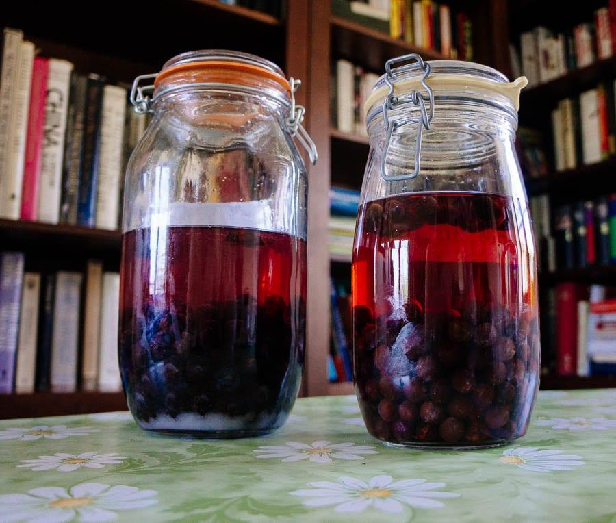 Wild plum gin and vodka in jars