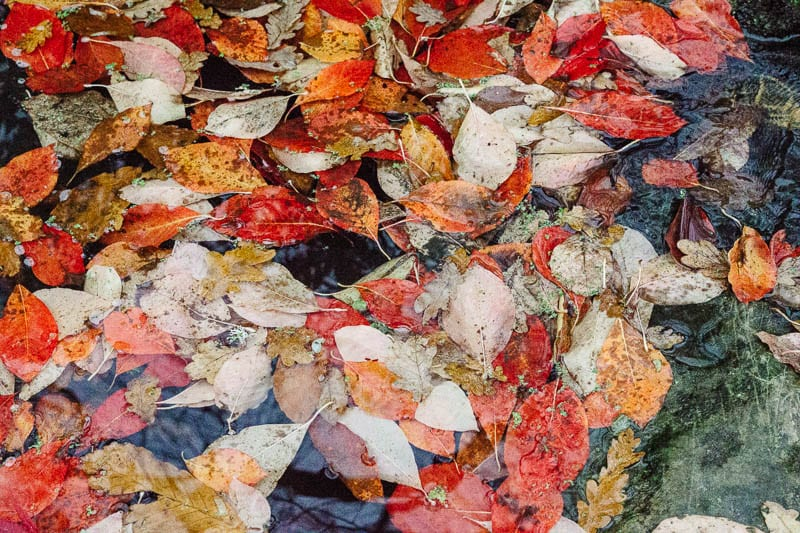 Autumn leaf colours in water