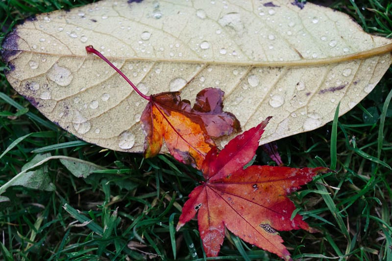 Autumn leaf colours rain drops