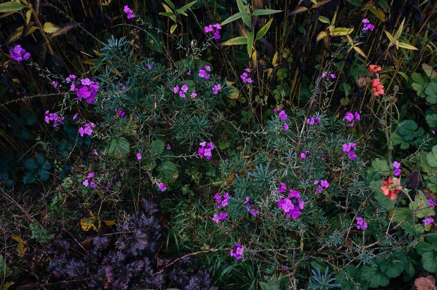 November Garden flower bed