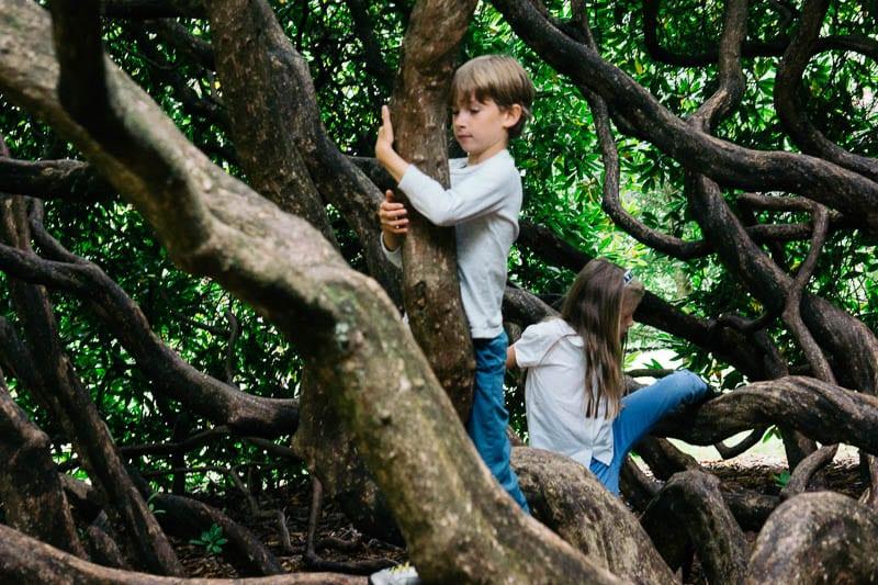 Let them climb trees kids climbing