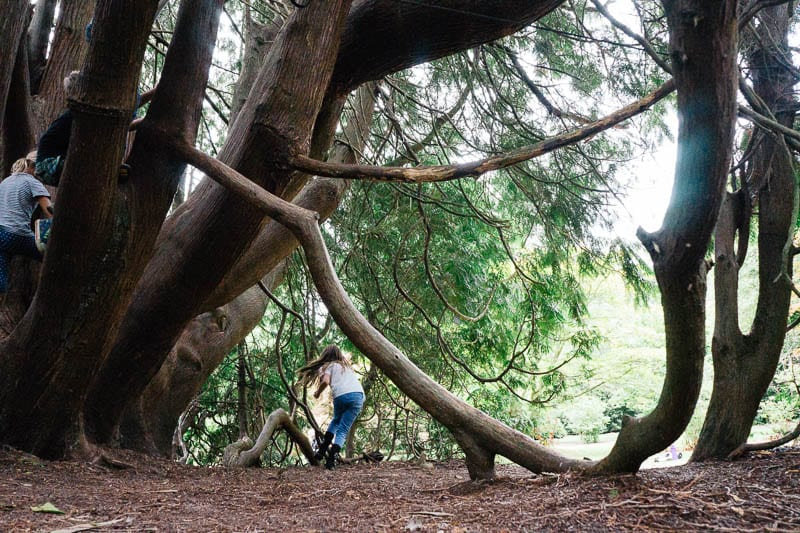 Let them climb trees Western Red Cedar