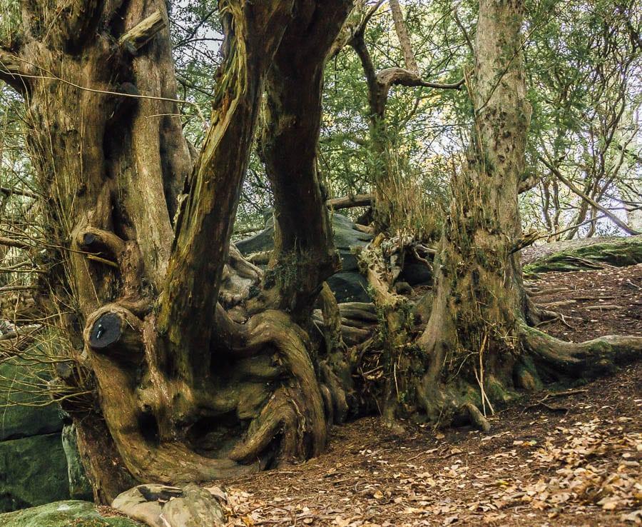 Let them climb trees Wakehurst Place