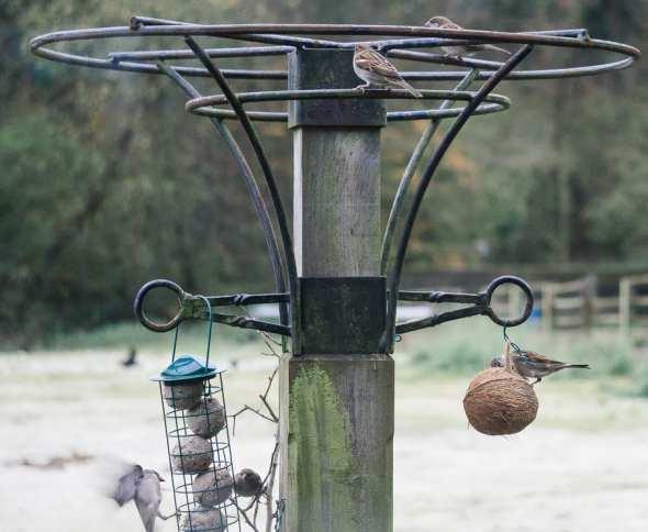 Winter Bird Feeding and sparrows