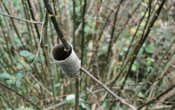 Winter bird feeding toilet roll finished