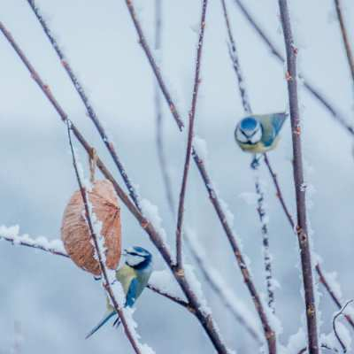 Are you ready for the Big Garden Birdwatch?