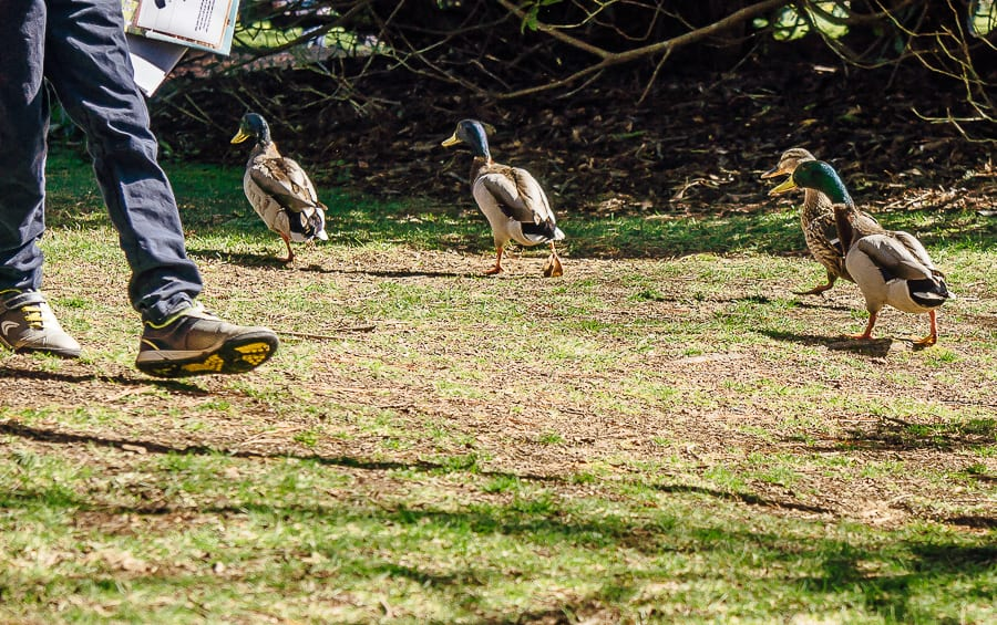 Sheffield Park Easter Egg Hunt ducks