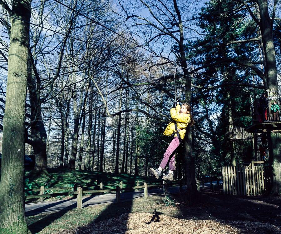 Treetop adventure zipwire fun