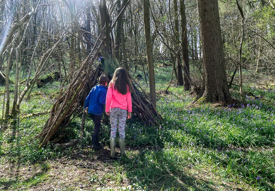 10 bluebell facts for kids