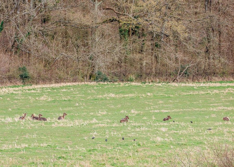 Sussex where deer rest