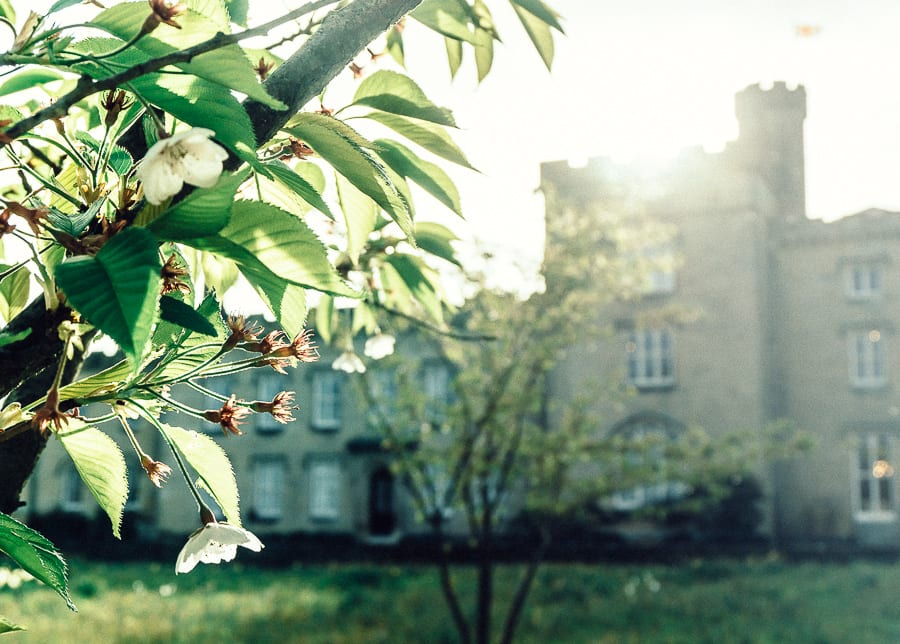 Chiddingstone Castle blossoms