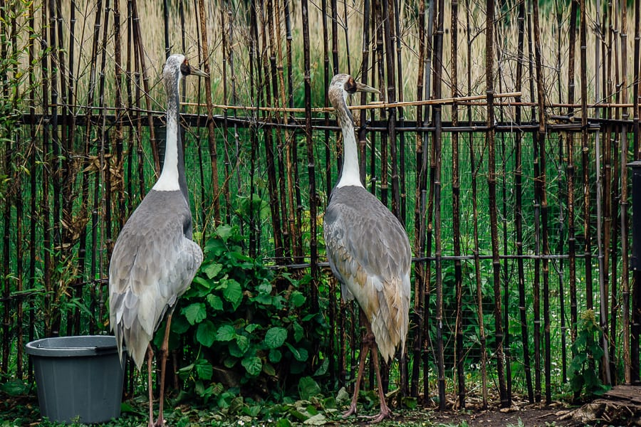 London Wetland Centre cranes