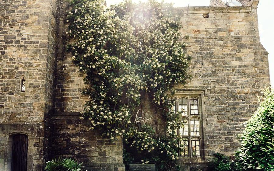 Nymans ruins and climbing roses