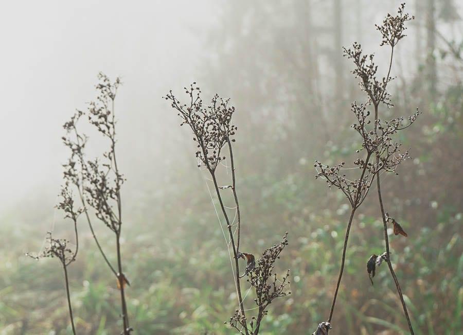 Wild flower path webs and mist