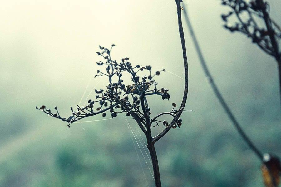 Wild flower path webs