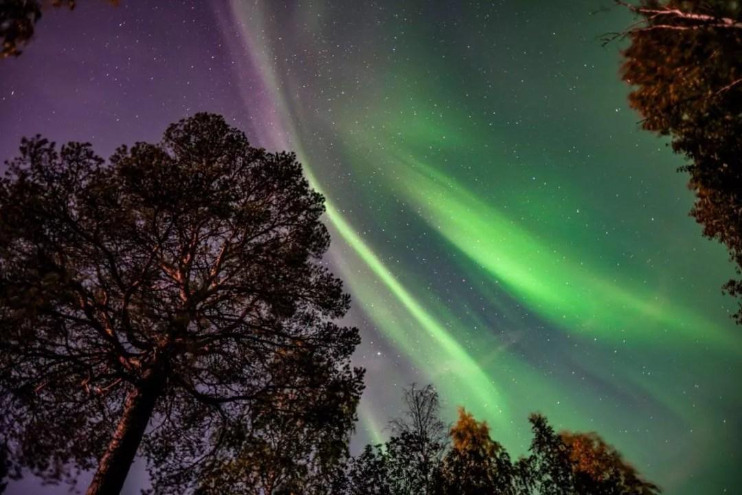 Aurora reindeer