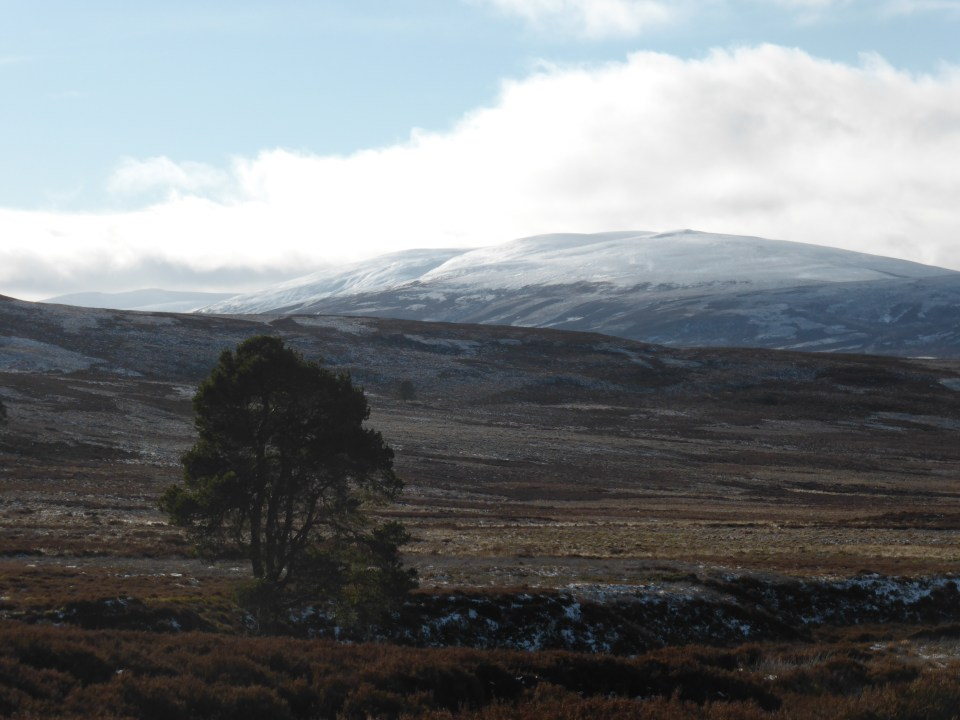 Wildlife walks in Scotland