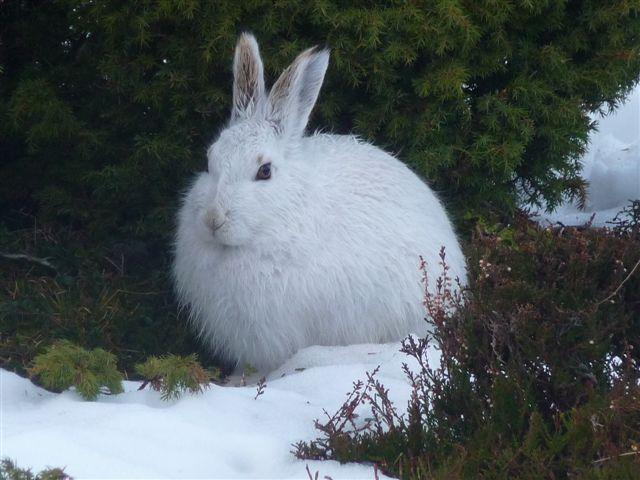 Wildlife in the winter