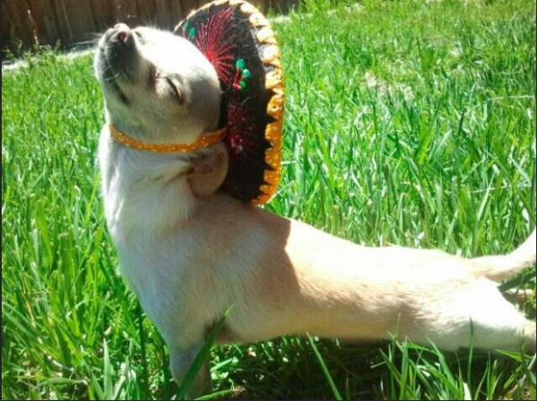 I don't know where I got this sombrero, but it's glorious