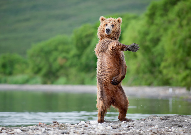 Animals With Better Dance Moves Than You (1)