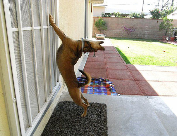Pets That Just Wants To Be Let Back In. Right Meow (23)