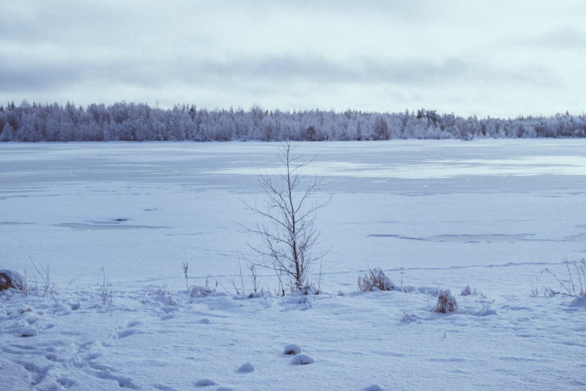 tree sleeping in Winter landscape