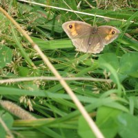 How wildlife groups damage our countryside