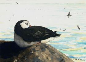 thumbnail Leo du Feu, Isle of May puffins, 15x21cm