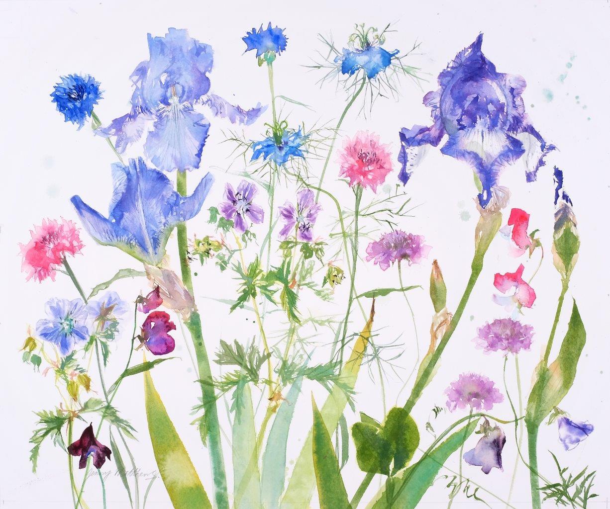 Irises Jenny Matthews
