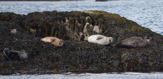 Seals galore