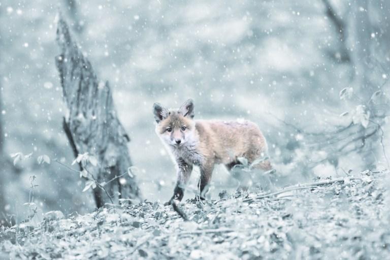 Hobby-Jäger misshandeln das Erbe der Menschheit