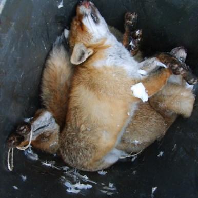 fox92