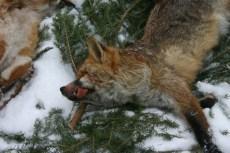 foxweek32
