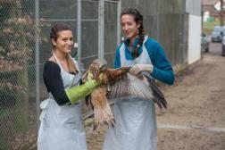 Der Greifvogel war in einem komatösen Zustand, als er ins COR gebracht wurde. Dort leerte Veterinärin Emilie Bréthaut (rechts) seinen Kropf.
