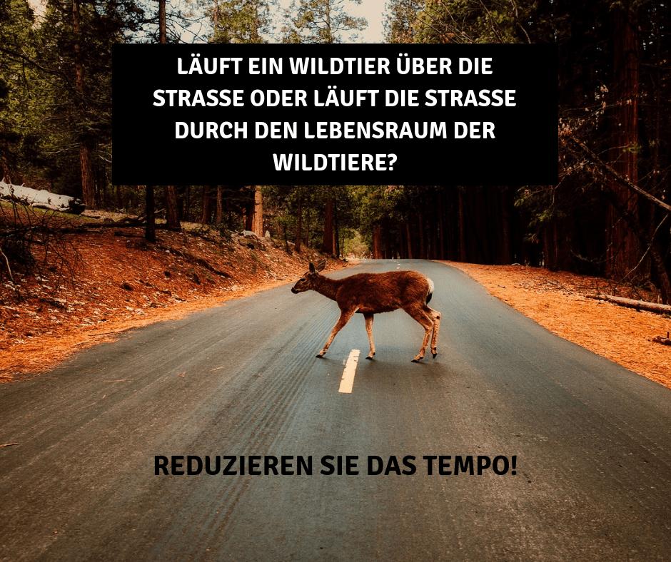 Wildwechsel: Vorsicht bei Zeitumstellung