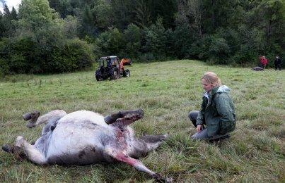 Schweizer Jäger Kriminalität