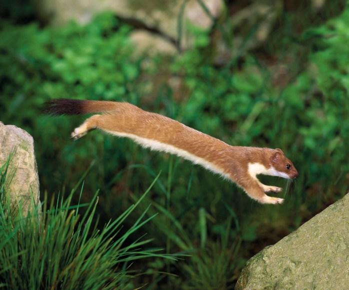 Pro Natura Tier des Jahres 2018 MANFRED DANEGGER
