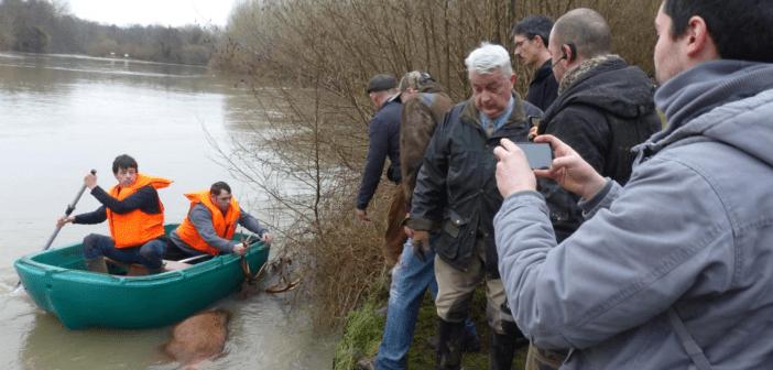 Frankreich: Hobby-Jäger ertränken Hirsch
