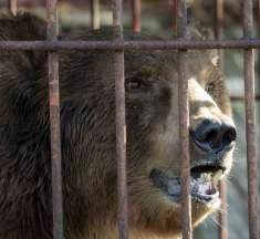 Erster Bewohner im Bärenland Arosa kommt aus Serbien