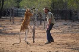 Brolga and kangaroo -®Hopping Pictures