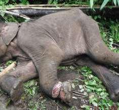 Asien: Hunderttausende Fallen töten Wildtiere