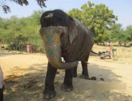 Elefant Amber Fort