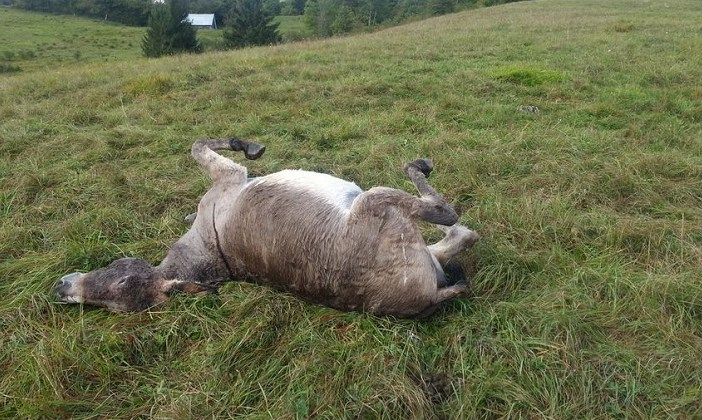 Schweizer Hobby-Jäger erschiesst 4 Esel.