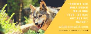 Wild beim Wild Banner