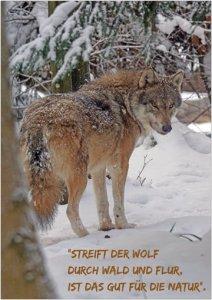 Streift der Wolf durch wald und Flur, ist das gut für die Natur.
