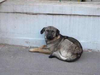 Hundeimport