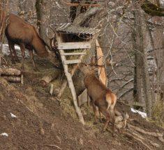 Österreich: Wildtierfütterungen