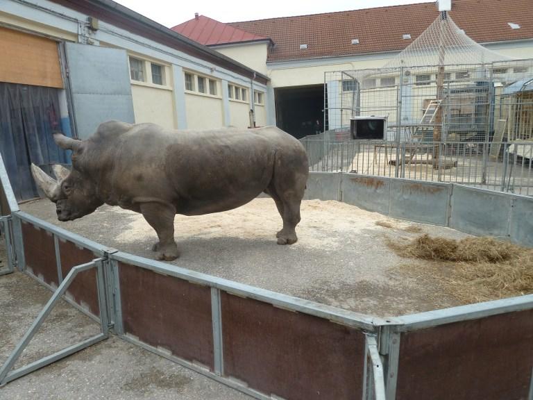 2012-03-04-Nashorn-Circus-Krone-Zoo-P1030543-c-PETA-D