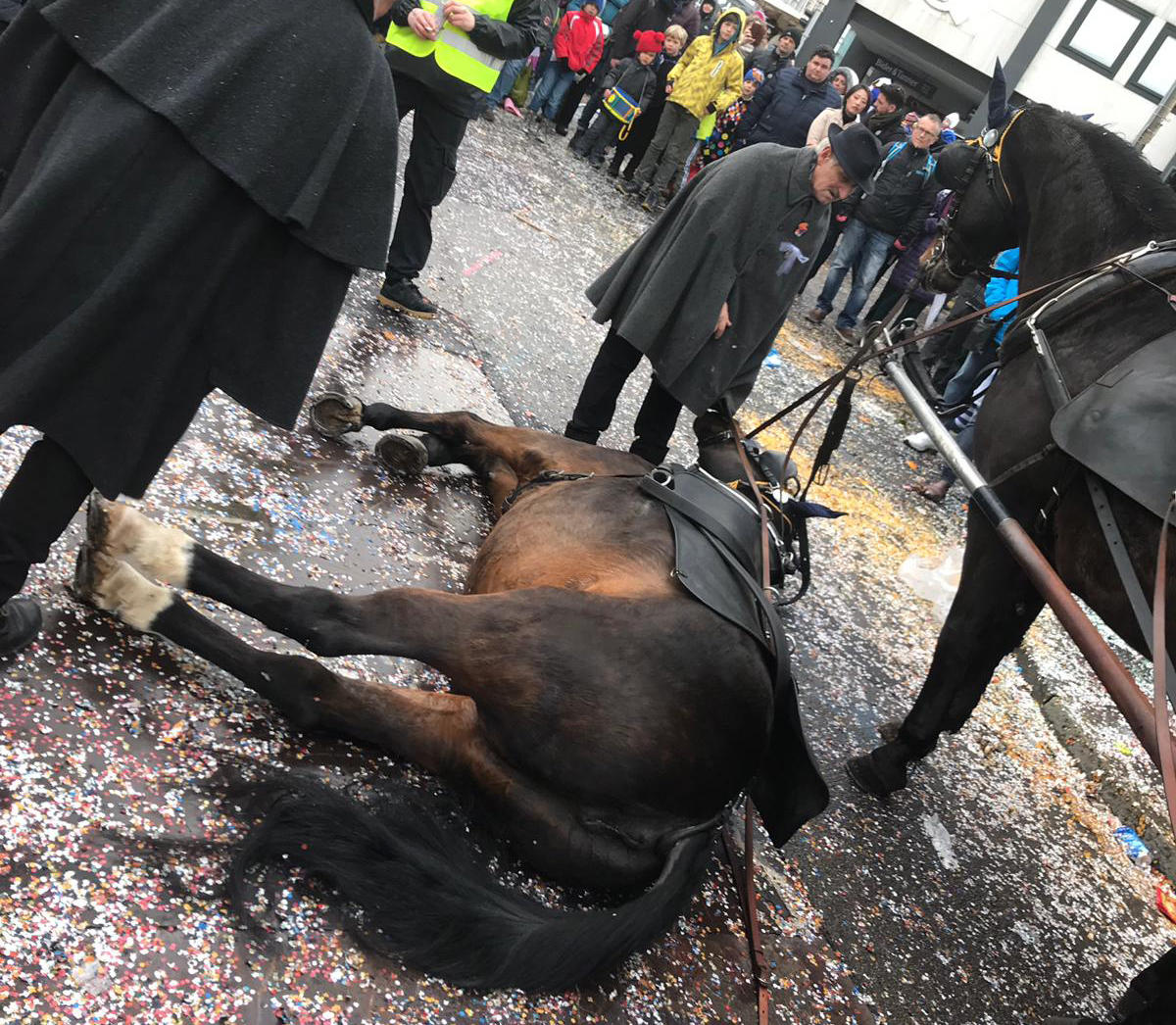 Pferd stürzt am Basler Fasnachtsmontag